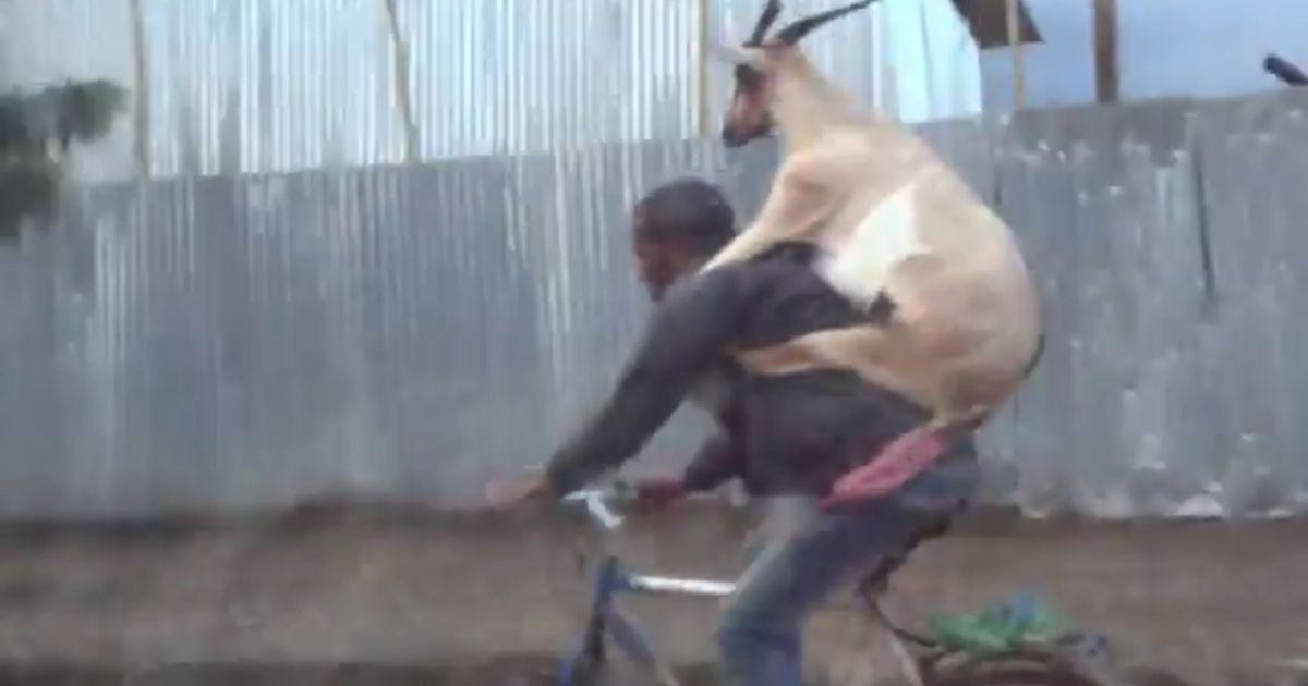 Ma excita capra vecinului