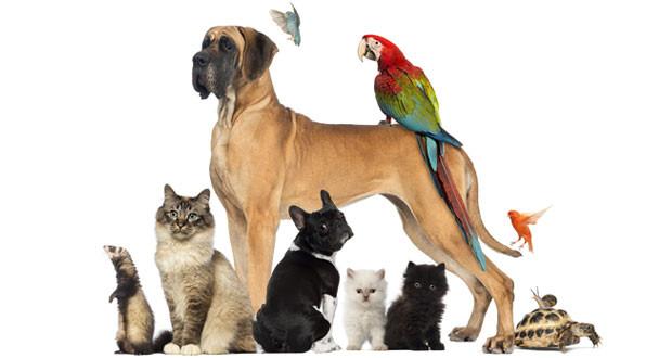 Ce animal ti se potriveste in functie de zodie?